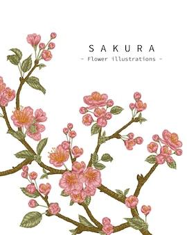 스케치 꽃 장식 세트. 벚꽃 꽃 그림.
