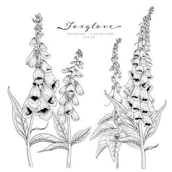 Эскиз цветочный декоративный набор. фоксглав цветочные рисунки. черный и белый с линией искусства изолированы. рисованной ботанические иллюстрации.