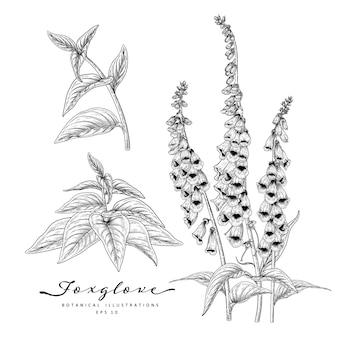 꽃 장식 세트를 스케치합니다. 디기탈리스 꽃 그림. 흰색 배경에 고립 된 라인 아트와 흑인과 백인. 손으로 그린 식물 삽화. 요소.