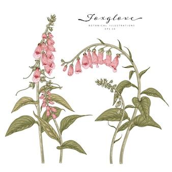 꽃 장식 세트를 스케치합니다. 디기탈리스 꽃 그림. 빈티지 라인 아트 흰색 배경에 고립입니다. 손으로 그린 식물 삽화. 요소.