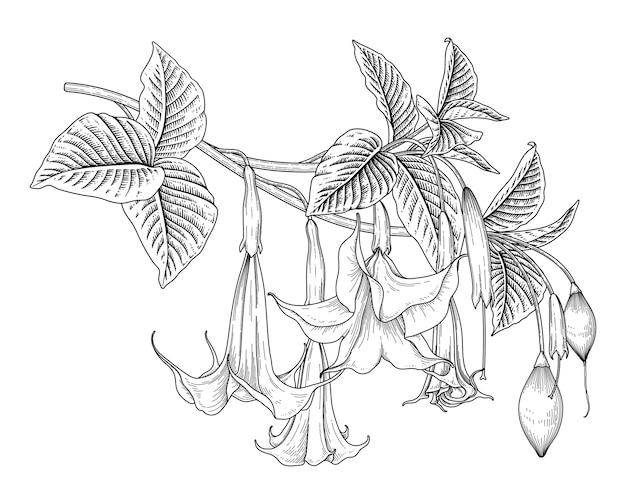 천사의 트럼펫 꽃 brugmansia 손으로 그린 삽화의 스케치 꽃 장식 세트