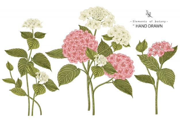 花の装飾セットをスケッチします。ピンクと白のアジサイの花の絵。