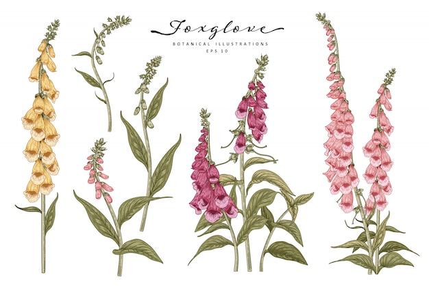 스케치 꽃 장식 세트. 분홍색, 노란색 및 보라색 디기탈리스 꽃 그림.