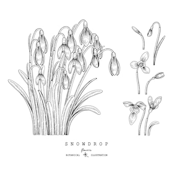 Sketch floral decorative set. snowdrop flower drawings. black and white with line art isolated on white backgrounds. hand drawn botanical illustrations. elements .