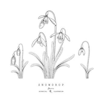 Sketch floral decorative set. snowdrop flower drawings.
