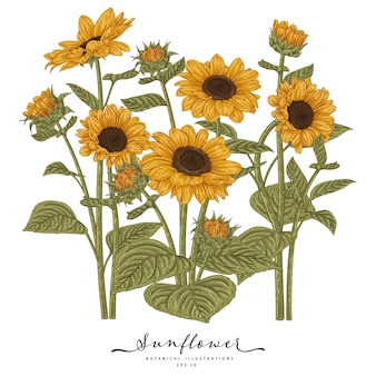 Sketch floral decorative set. sunflower drawings. highly-detailed line art isolated. hand drawn botanical illustrations.
