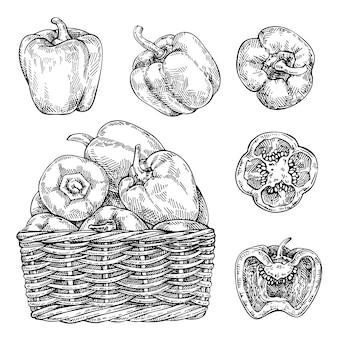 籐のバスケットに新鮮なピーマンをスケッチします。手描きの甘いピーマンセット。詳細なベジタリアン料理の描画。農産物市場の製品。