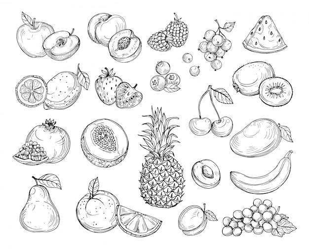 Эскиз фруктов. клубничная дыня, персик, манго.