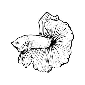 手描きのベタの魚をスケッチ
