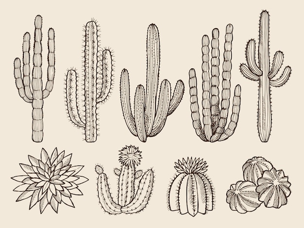 Sketch hand drawn of cactuses and various wild plants