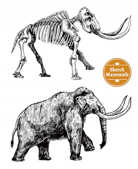 Sketch hand drawn mammoth