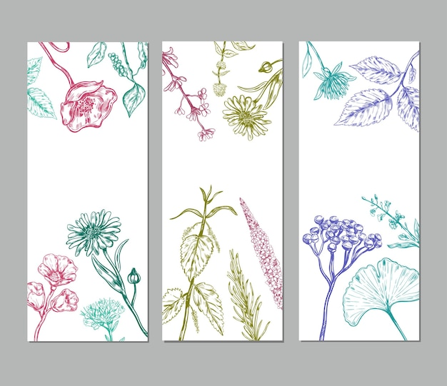 Sketch herbal vertical banners with medicinal organic herbs valuable for human health