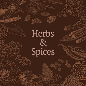Sketch herbs and spices template with cinnamon coriander poppy cardamom chili pepper mint vanilla nutmeg zest ginger