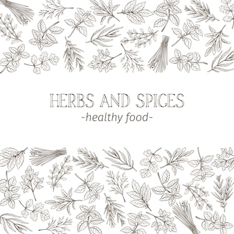 Sketch herbs and spices