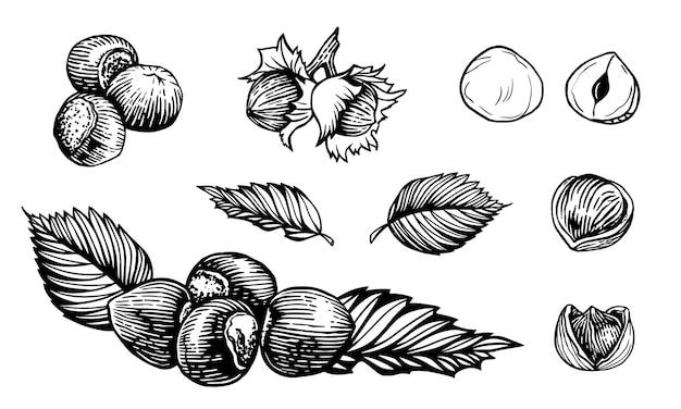ヘーゼルナッツ彫刻スタイルの手描きの閉じたナットと開いたナットのスケッチイラスト