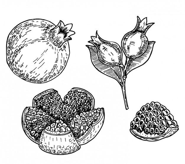 석류의 스케치 그림 punica granatum 손으로 그린 스케치 스타일 석류 세트입니다. 씨앗과 잎 석류. 스케치 스타일 일러스트. 유기농 식품 .