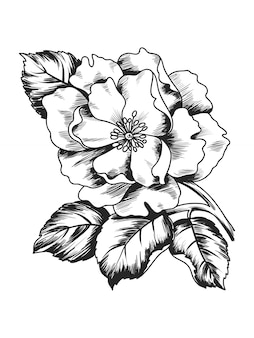 Sketch illustration with branch flower peony