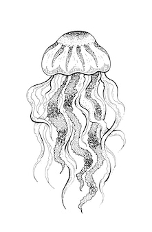 Sketch jellyfish