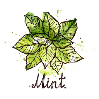 ミントの葉をスケッチ