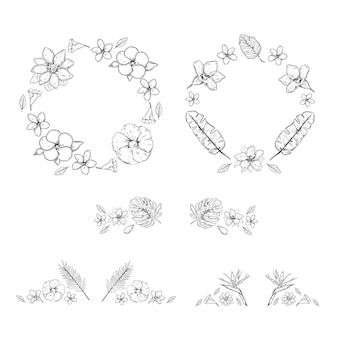 Sketch monochrome floral exotic plants collection