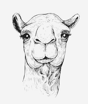 낙타의 스케치. 손으로 그린 그림 격리 됨 화이트