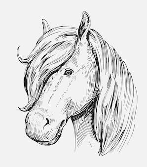 말의 머리의 스케치. 손으로 그린 그림 격리 됨 화이트