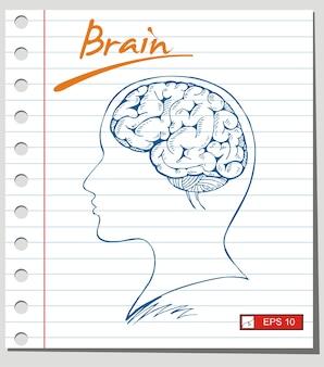 紙の背景に脳のスケッチ