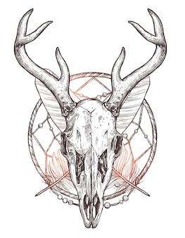 白で隔離の鹿の頭蓋骨のスケッチ