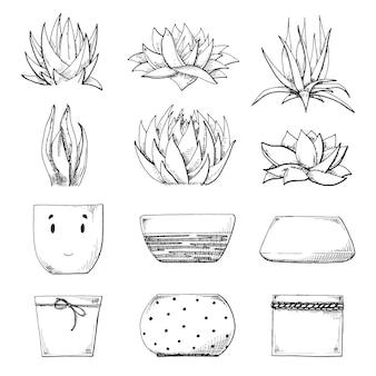 Эскиз различных горшков и суккулентов. векторная иллюстрация стиля эскиза.