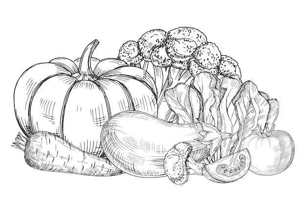 新鮮な農場野菜イラストのスケッチ