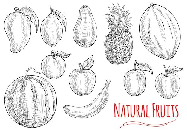 白で隔離の新鮮な果物のスケッチ