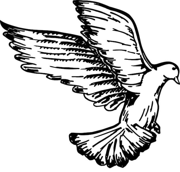 Эскиз полета птицы голубь векторный рисунок полета птицы рисованной иллюстрации