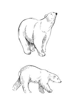 북극곰의 스케치. 손으로 그린 그림 격리 됨 화이트