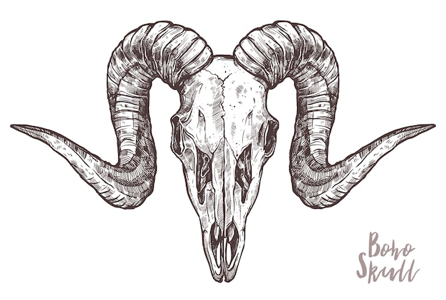 흰색 절연 ram 해골 스케치
