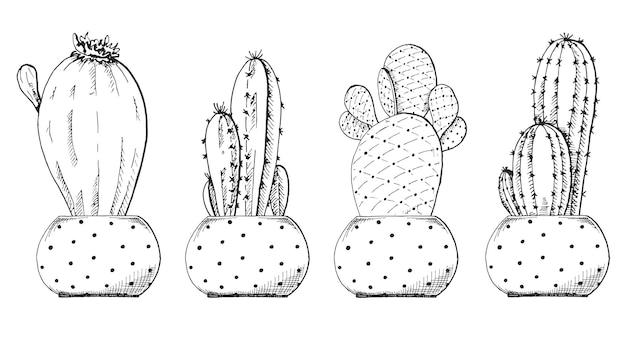 냄비에 다육 식물의 스케치.