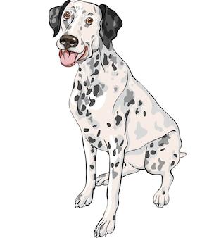 陽気な斑点のある笑顔の犬ダルメシアンの品種のスケッチ Premiumベクター