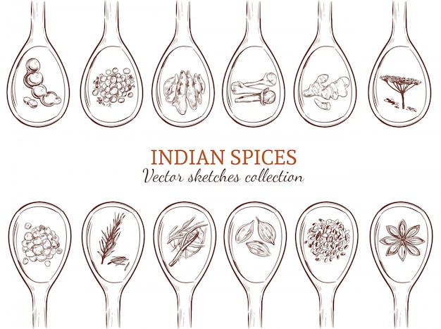 Sketch organic indian spices set