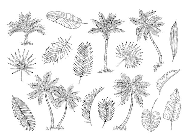 야자수를 스케치하십시오. 열 대 우림 나무와 이국적인 야자수 잎 빈티지 핸드 드로잉 벡터 격리 설정