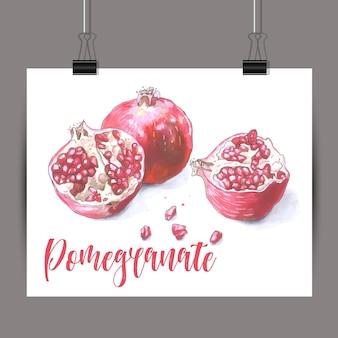 Schizzo di pomegrante