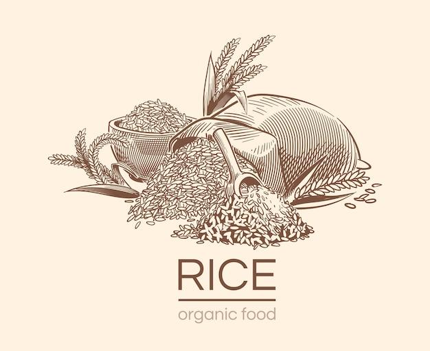 Эскиз рисового фона. сельскохозяйственное растение, старинные рисованной органические семена риса и мешок зерна.
