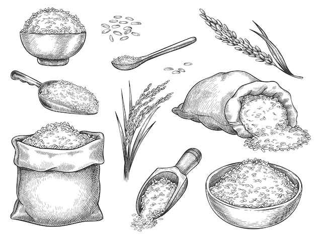 쌀알을 스케치합니다. 빈티지 씨앗 더미와 농장 귀입니다. 가방, 국자 및 숟가락에 전체 basmati 곡물. 쌀국수 한그릇. 손으로 그린 벡터 세트입니다. 그림 건강 성분, 식사 영양 그림