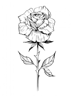 Sketch of rose. hand drawn outline