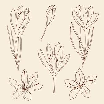 Эскиз цветы шафрана