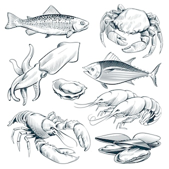Sketch seafood. lobster shellfish fish shrimp. hand drawn seafoods meal vintage vector set isolated