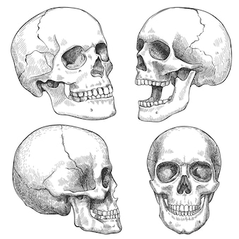 Эскиз черепа. рисованной анатомические черепа в различных проекциях, монохромные татуировки, анатомия лица хэллоуин ужас векторные элементы. гравированный человеческий череп с закрытой и открытой челюстью