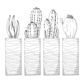 Sketch of succulents in high pots.  illustration of a sketch style.