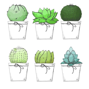 Sketch of succulents in pots. stylized watercolor. vector illustration.