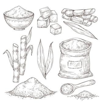 설탕을 스케치하십시오. 달콤한 조미료 가방, 격리된 사탕수수 줄기 잎. 손으로 그린 제조, 조각 식물 힙 분말 벡터 삽화. 사탕수수 봉지, 설탕 수확용 지팡이