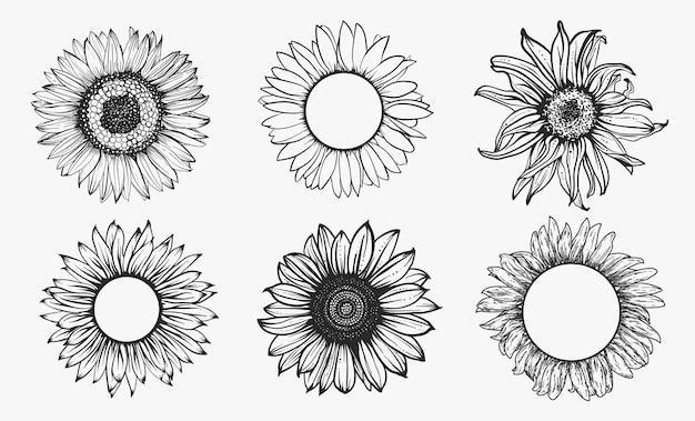 Sketch of sunflower set. hand drawn outline. illustration.