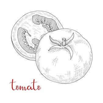 トマトをスケッチします。分離されたトマト。